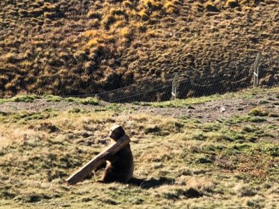 Bär napa, Arosa: Bergparadies statt Gefägnis