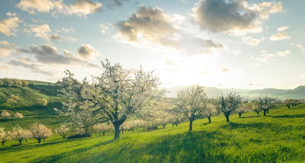 Fricktaler Chriesiwäg: Heiss auf den Aargau