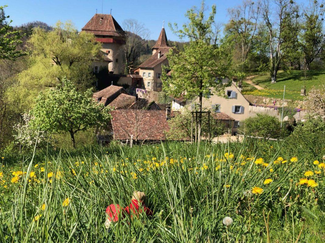 Schloss Wildenstein (BL) und seine Eichen