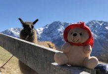 teddy-b.ch - Monte Comino (TI)
