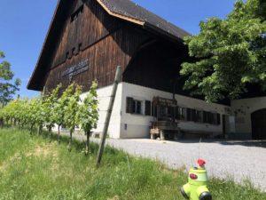 teddy-b.ch - Weinbaumuseum Au ZH