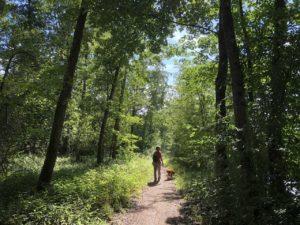 teddy-b.ch - Waldgebiet Chly Rhy