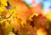 teddy-b.ch - Herbstfärbung im Seleger Moor