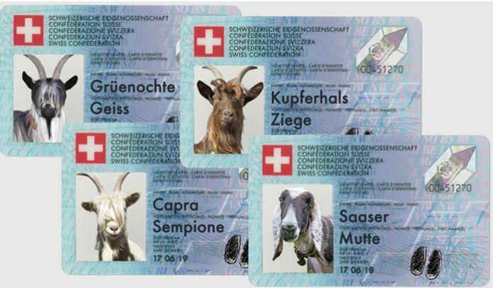teddy-b.ch - 4 Schweizer Tierrassen erhalten offiziell eine Identität