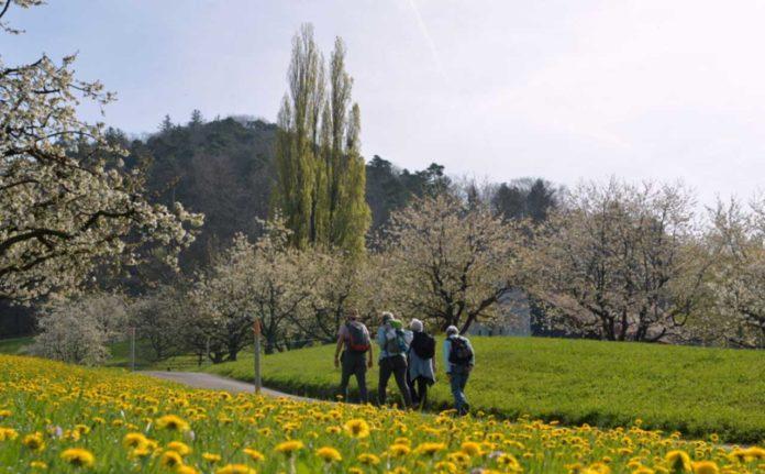 teddy-b.ch - Kirschen - Baselland