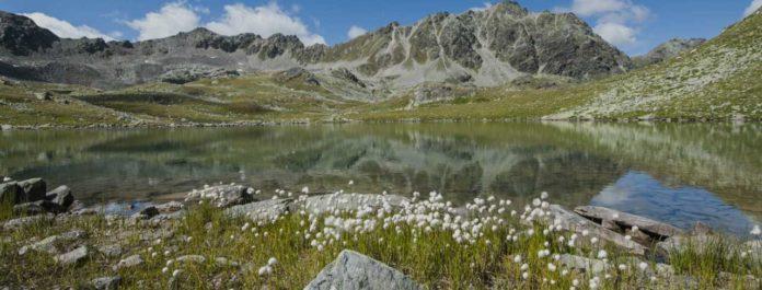 teddy-b.ch - Schweizerischer Nationalpark (GR)