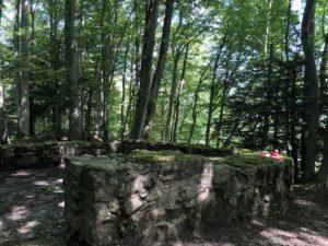 teddy-b.ch - Ruine Kindhausen (AG)