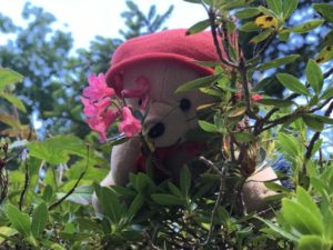 teddy-b.ch - Alpenrosen